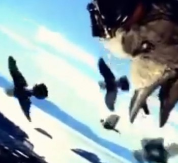 nissan-pigeons-super-bowl-1997