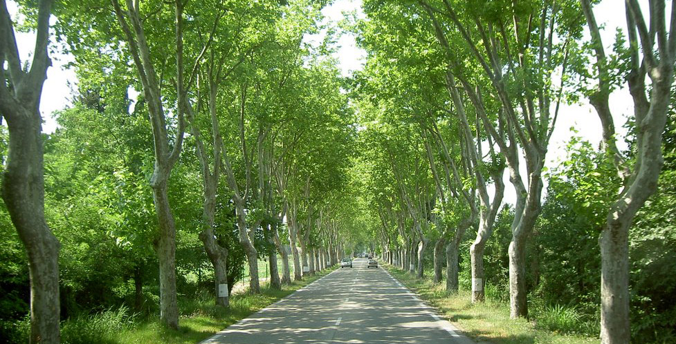 Pourquoi la Nationale 7 est-elle bordée d'arbres ?